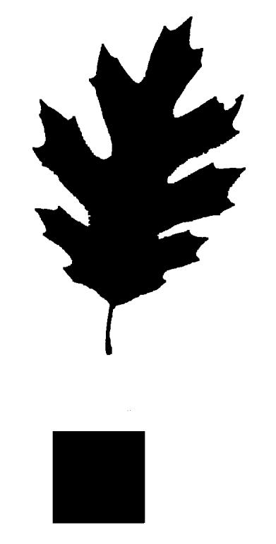 black oak leaf image after processing